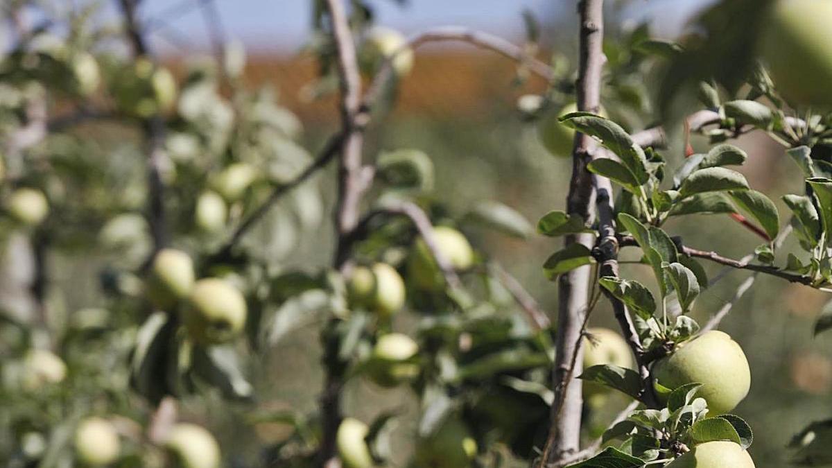 Regions productores de fruita, a favor d'invertir més en innovació