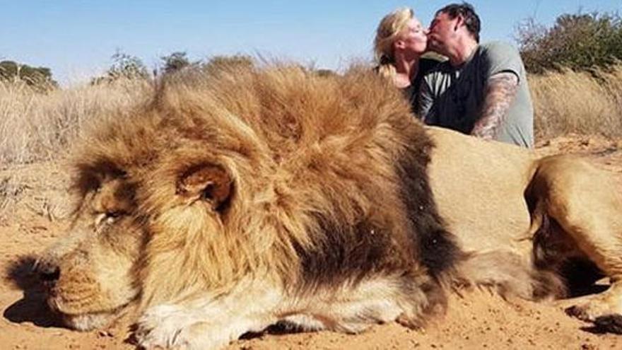 Polémica por la foto de una pareja besándose junto al león que acaba de cazar