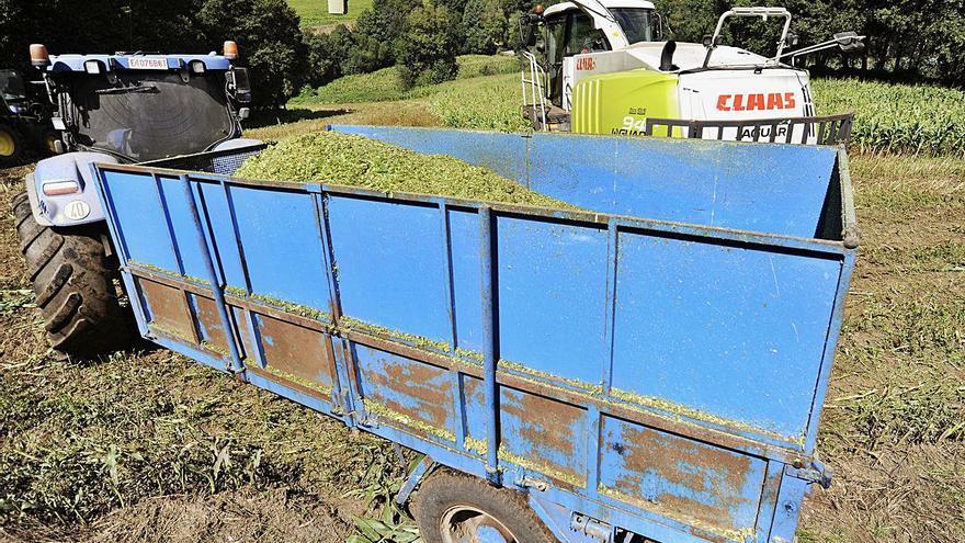 Las comarcas pierden 36 hectáreas de prado y cultivos durante el último año