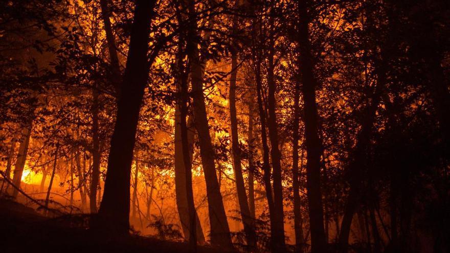 Investigado un supuesto incendiario de A Gudiña como causante de cinco fuegos el último año
