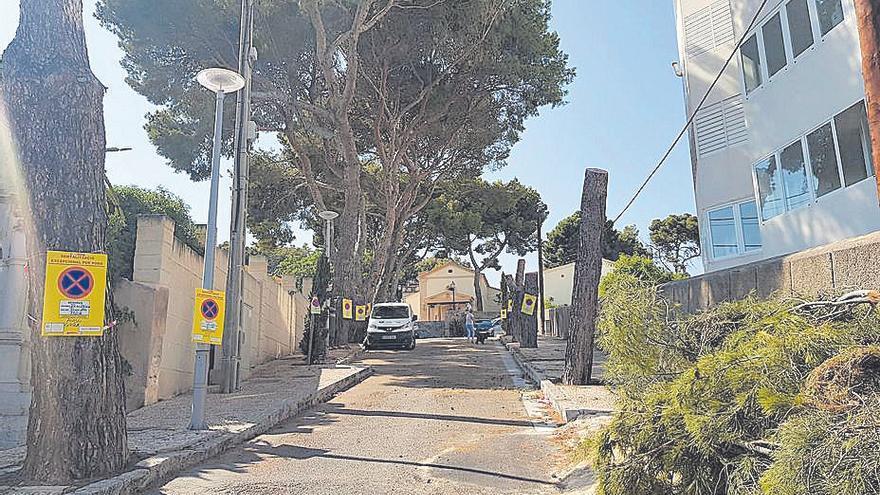 La calle Santuari de la Bonanova se queda sin pinos