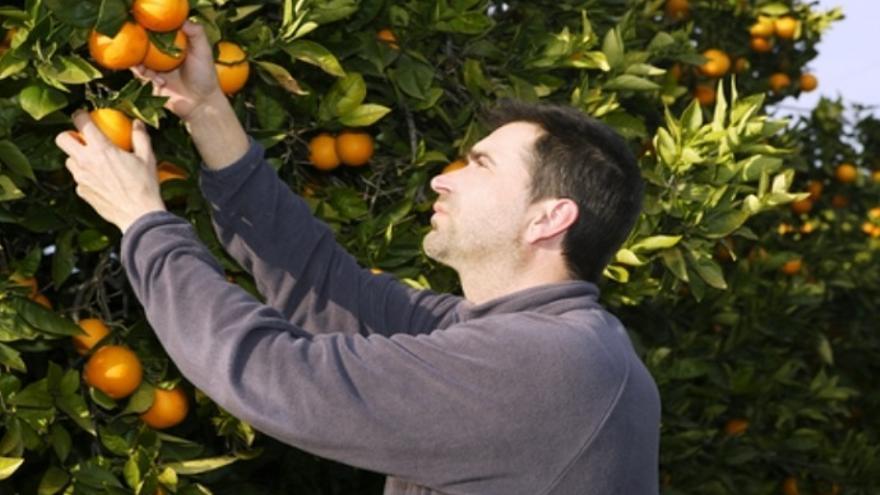 Arranca la campaña que más trabajo genera en Valencia: la naranja