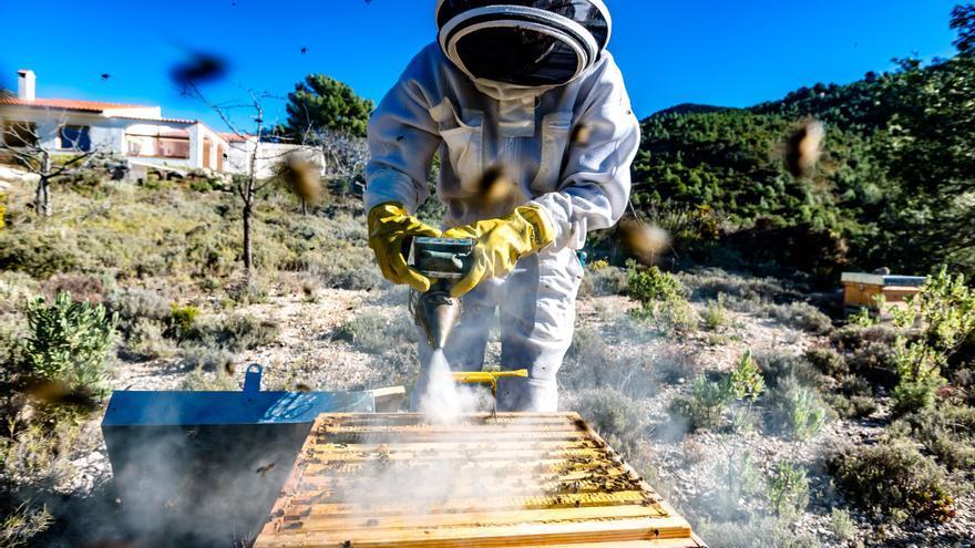 El sector apícola valenciano teme por su supervivencia ante la nueva normativa