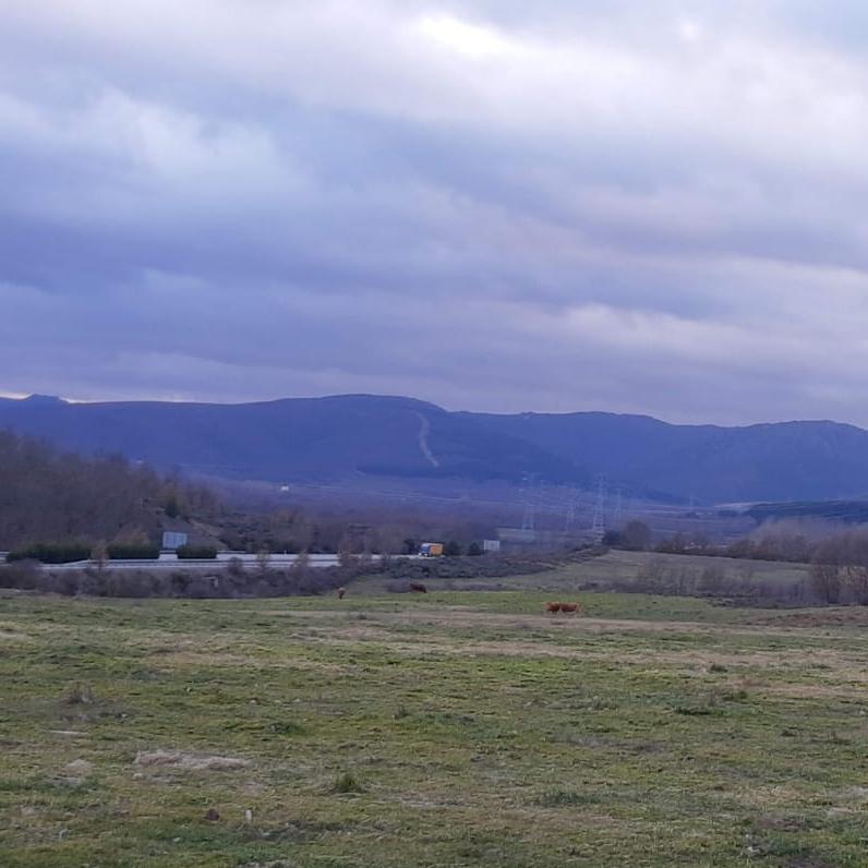 La ganadería pasta en terrenos que se destinan a la planta fotovoltaica