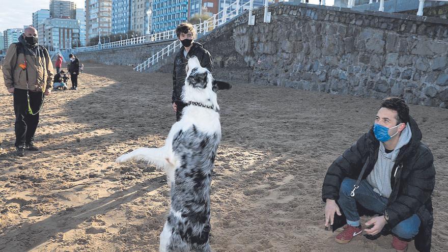 Las zonas para perros de Gijón, espacios seguros