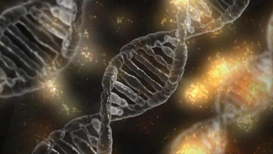 Identifican en el cerebro el ADN que nos hace humanos