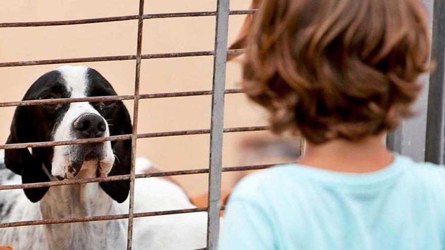 El servicio de recogida de animales cambia de manos tras más de dos décadas de gestión de la Protectora