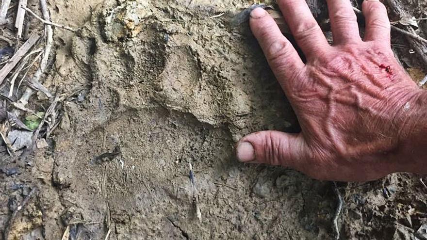 """Investigadores del oso en Zamora piden a la Junta """"que proteja su hábitat con urgencia"""""""