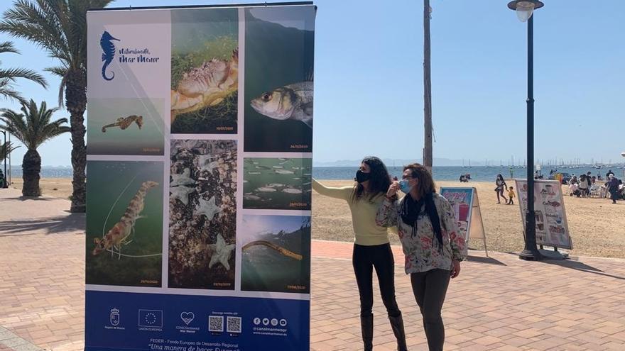 La fauna del Mar Menor, a exposición