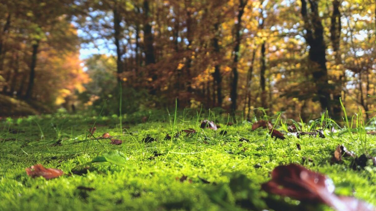 El suelo aumenta su emisión de carbono a la atmósfera por el cambio climático
