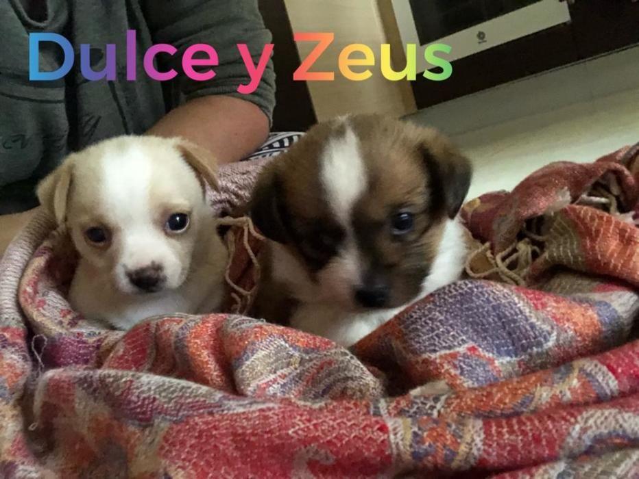 Ulce y Zeus