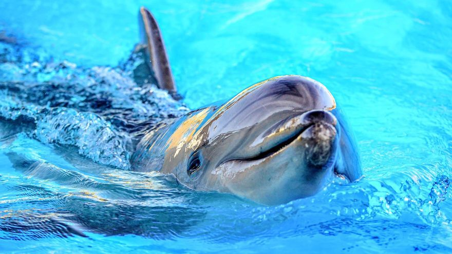 Música para delfines