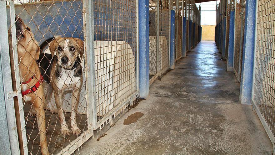 Gandia y Oliva condicionan el servicio mancomunado de recogida de animales en la Safor y la Ribera