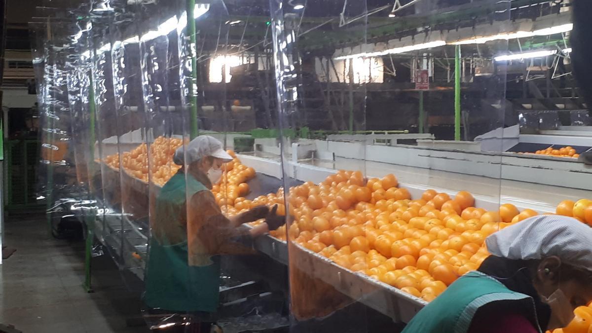 Los cítricos soportan aranceles del 25 % en Estados Unidos