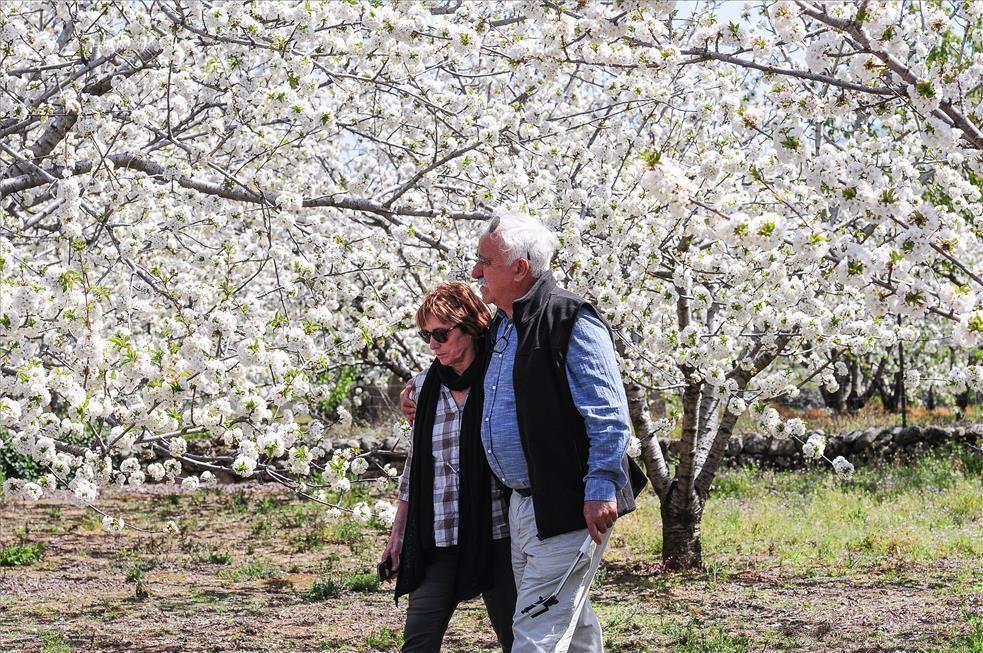 La eclosión del cerezo en flor