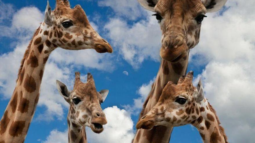 Los animales se comunican en frecuencias que no podemos oír