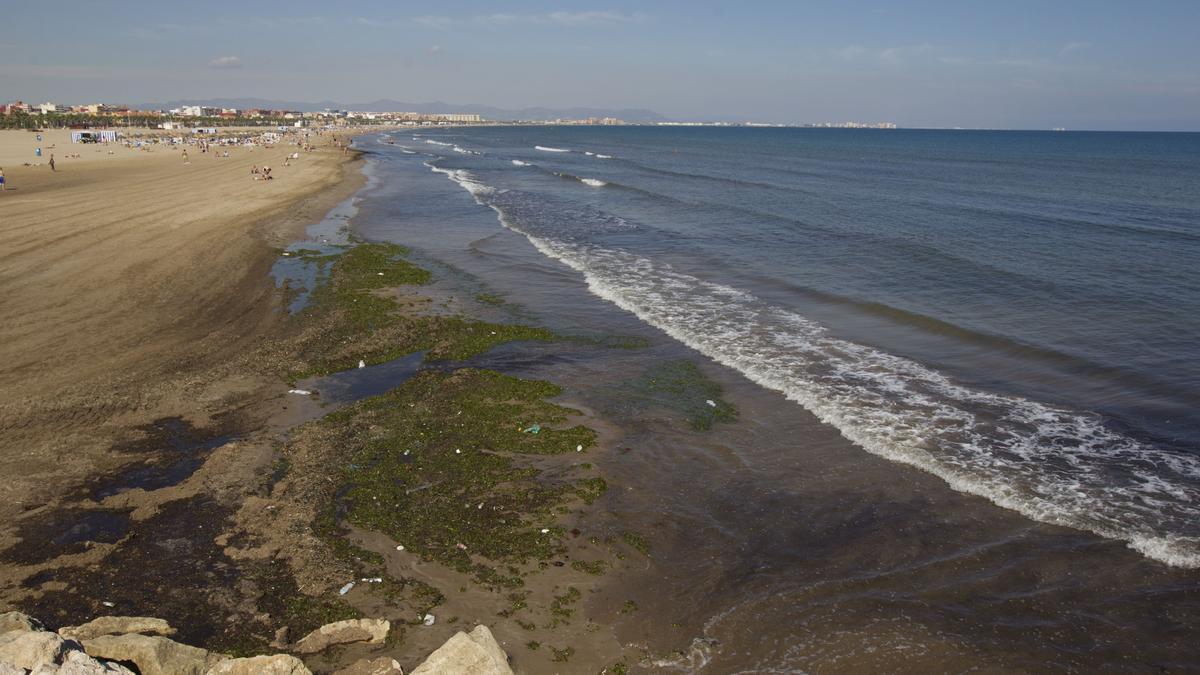 Indemnizan a una familia que fue de vacaciones y encontraron la playa llena de algas