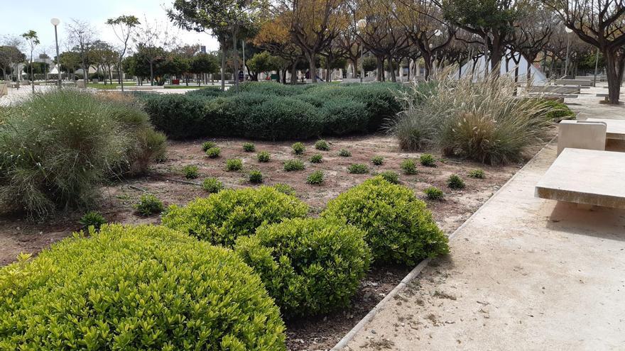 Desempleados contratados por el Ayuntamiento plantan mil arbustos de bajo consumo hídrico en Lo Torrent