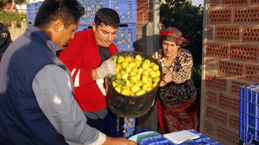 La mayoría de los extranjeros de la Ribera son rumanos, marroquíes y franceses