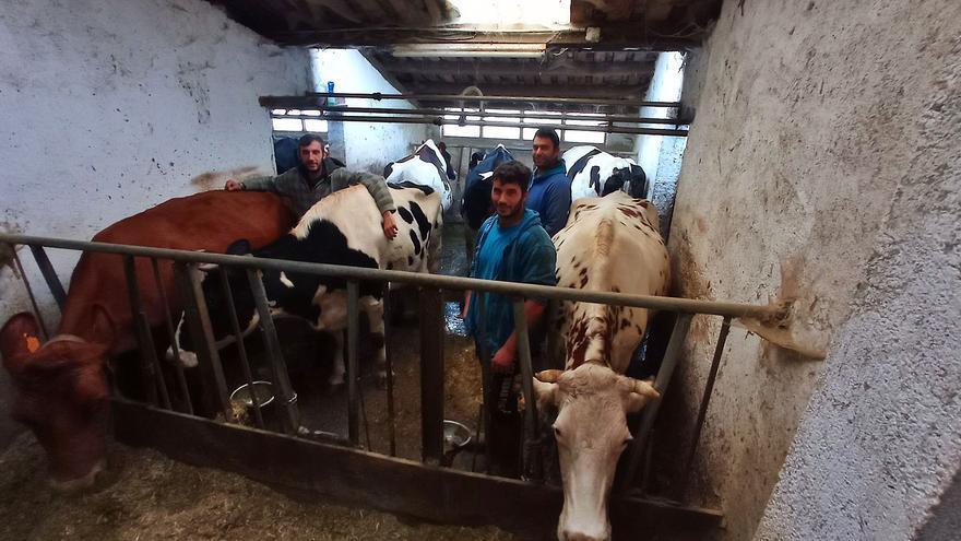 """La """"Leche de Picos"""" cuaja: el proyecto de tres jóvenes que surten a 30 queserías y quieren crear sus propios yogures"""