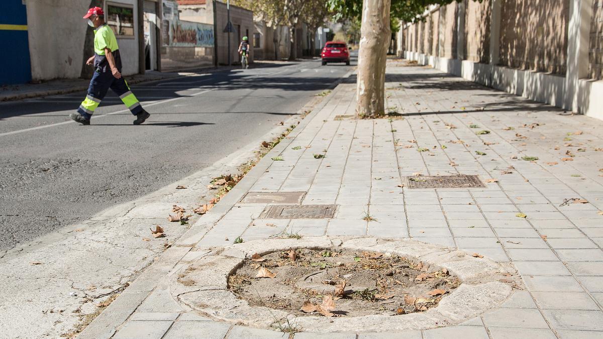 La ciudad ha perdido 4.000 árboles en 5 años
