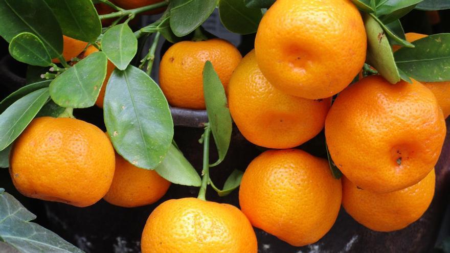 De dónde son las naranjas que vende Mercadona