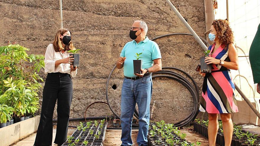 El Cabildo de La Gomera crea el primer semillero de café que se desarrolla en la isla