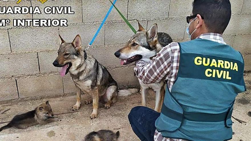 Dos jóvenes roban perros de raza en Barx e intentan su venta a bajo precio en Cullera