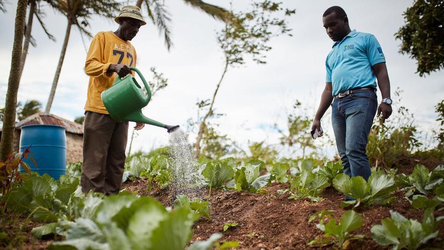 Haití: una de cada tres persones necessita ajuda alimentària urgent