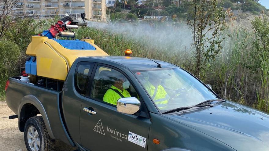 El Campello comienza en Cala Baeza la campaña de fumigación contra los mosquitos común y tigre