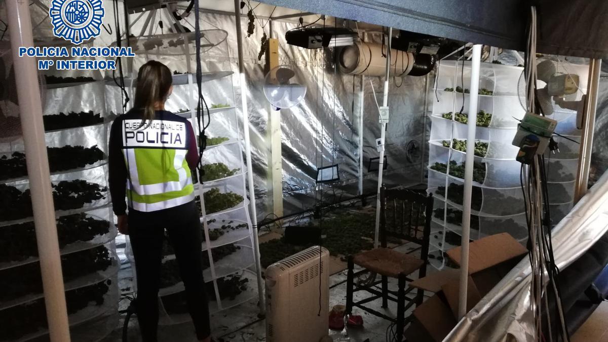 La Policía Nacional interviene una plantación de marihuana en Dénia