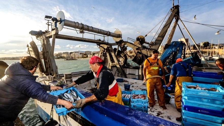 Devoradores de peces del Mediterráneo