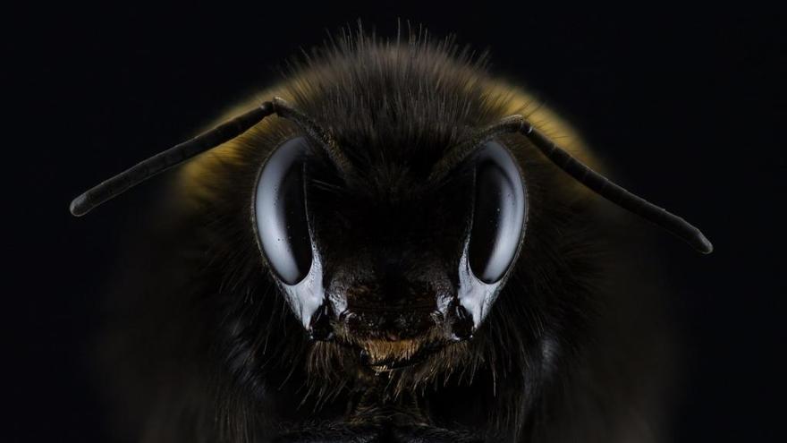 Muere un septuagenario en Lugo por la picadura de una abeja