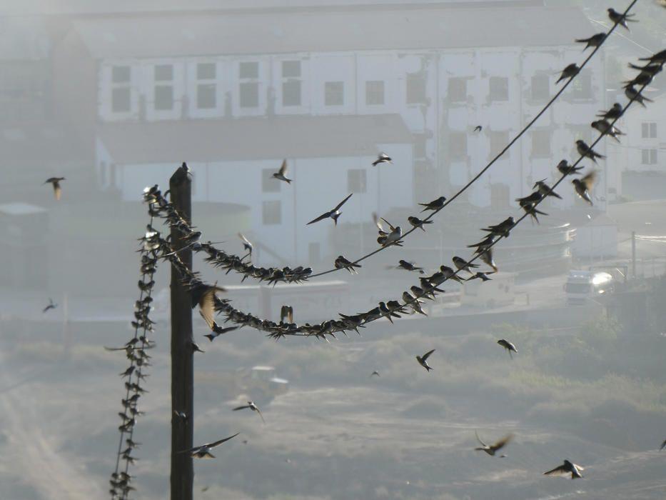 Els ocells reposen sobre el cable elèctric