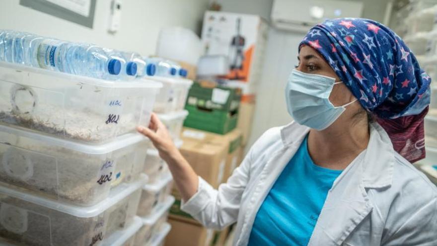 Canarias destina seis millones a captar y retener su talento científico