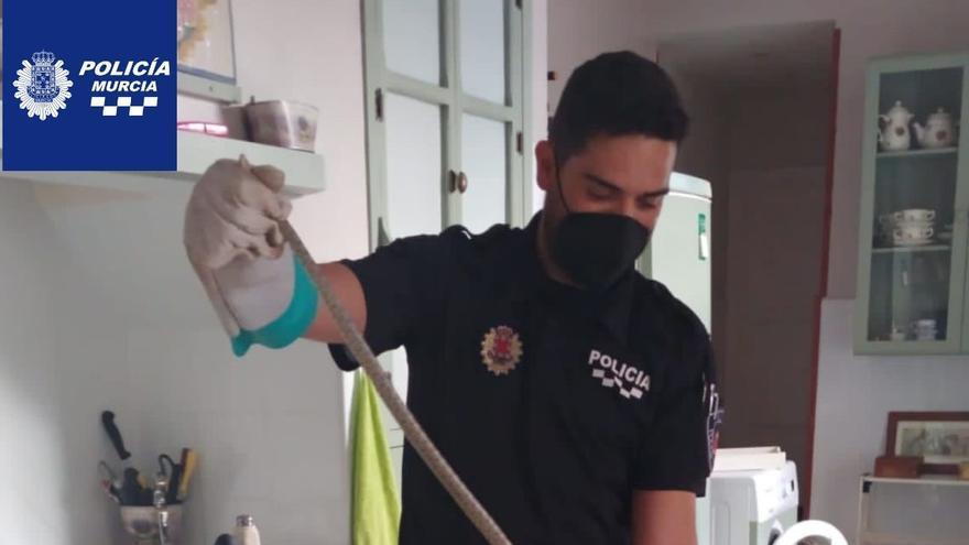 Rescatan dos culebras de herradura en casas de Sangonera la Seca y Puebla de Soto