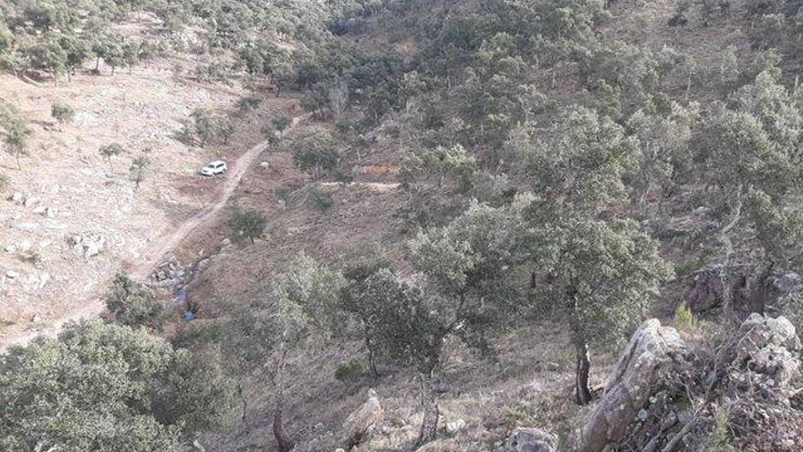 Comença una nova fase de treballs forestals per protegir l'Albera contra incendis