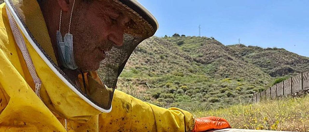 El apicultor atendiendo sus colmenas en las medianías de Gáldar. | | LP/DLP