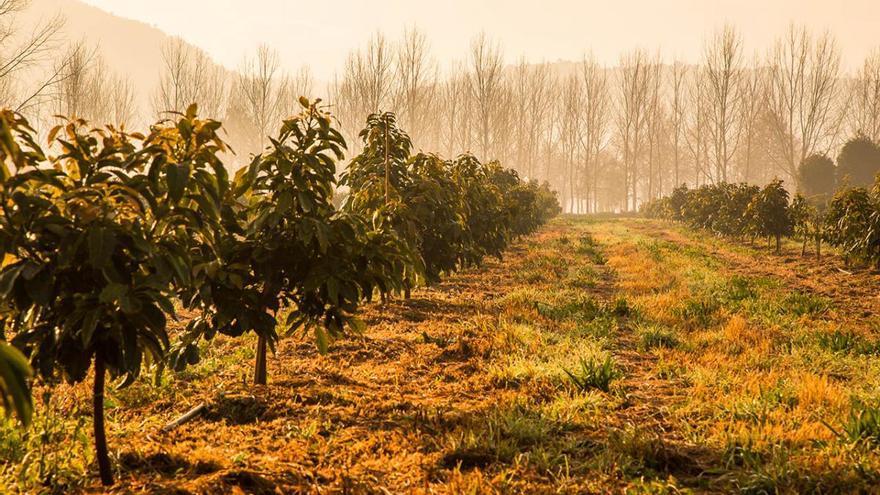 Los nuevos cultivos del campo gallego