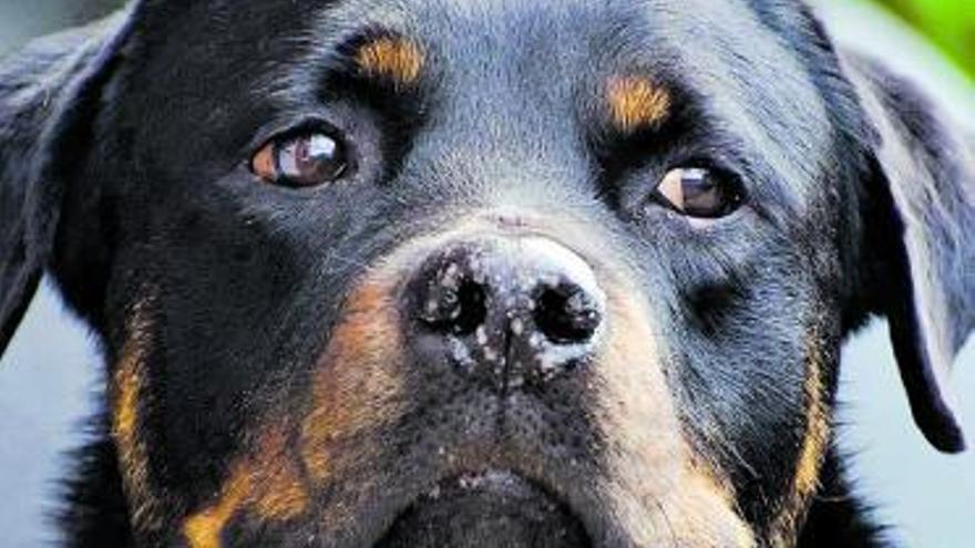No hay «okupa»sin perro