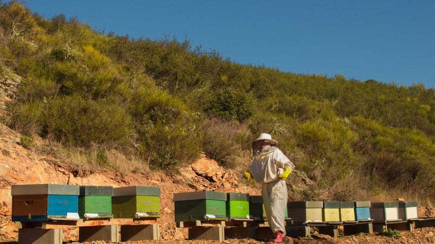 Una miel alistana logra el máximo galardón en una cata ciega en Grecia