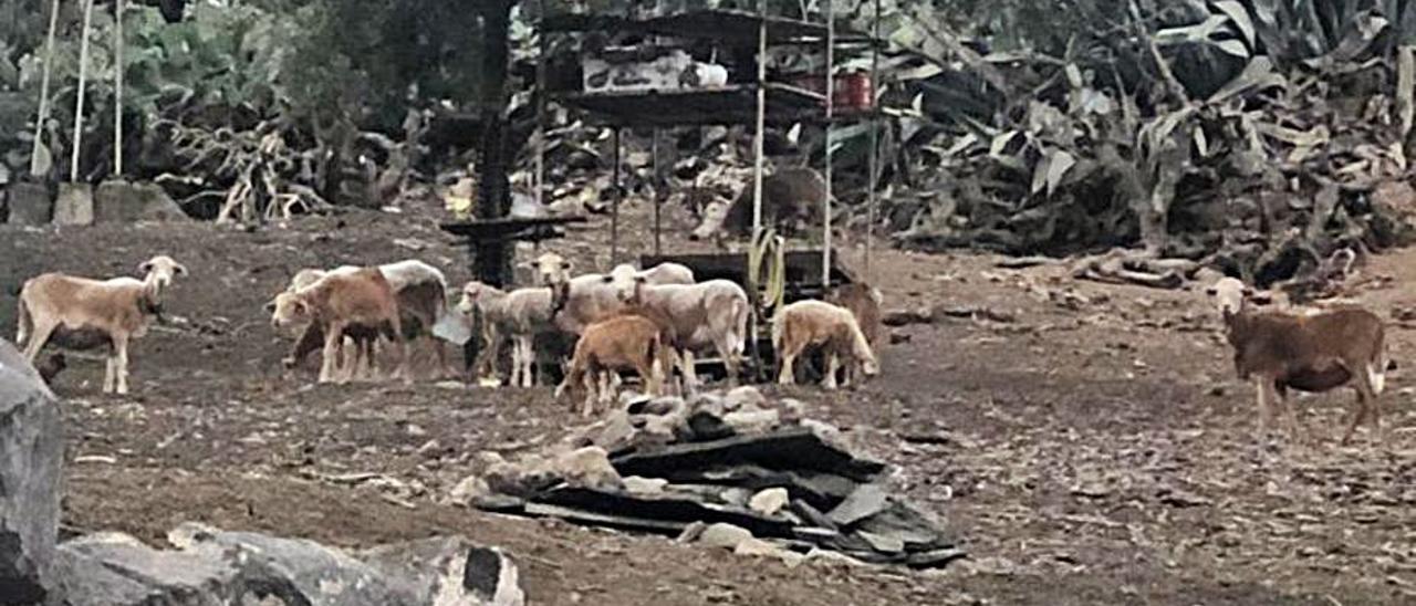 Un vecino denuncia la instalación de una finca en un terreno protegido de Tafira