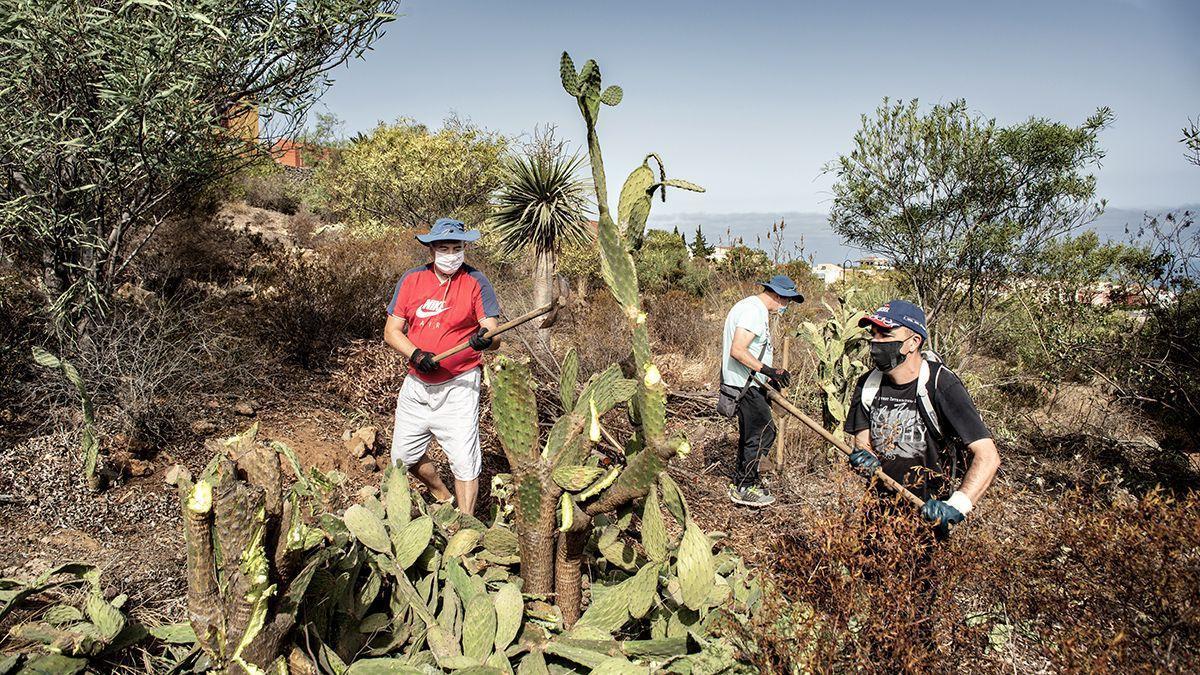 El Cabildo de Tenerife y Santa Úrsula trabajan para recuperar el bosque termófilo en La Quinta