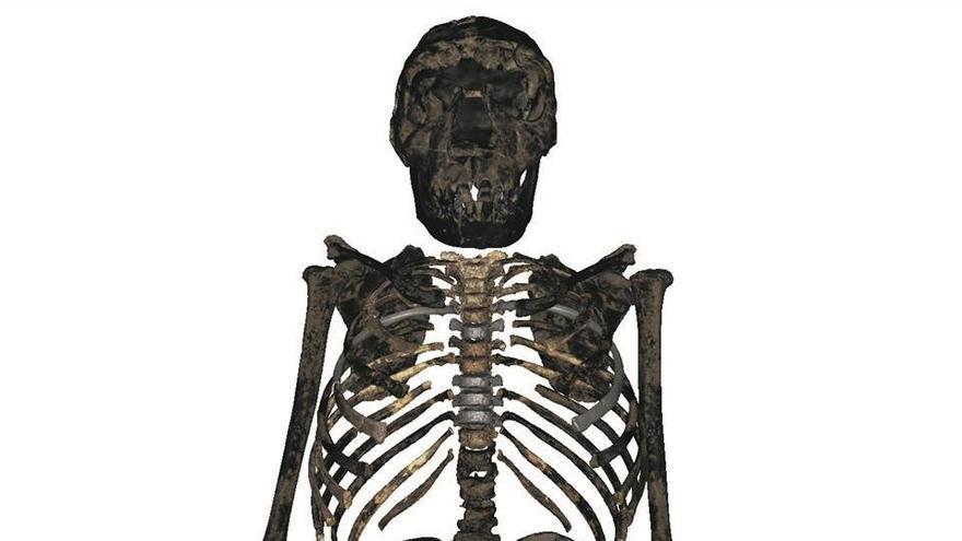 Reconstrucción del esqueleto del niño de Turkana.