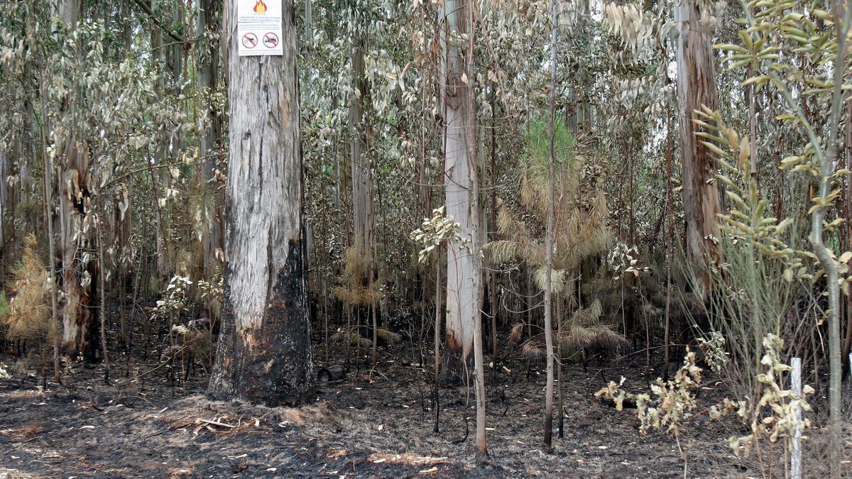 Daños de un incendio forestal.