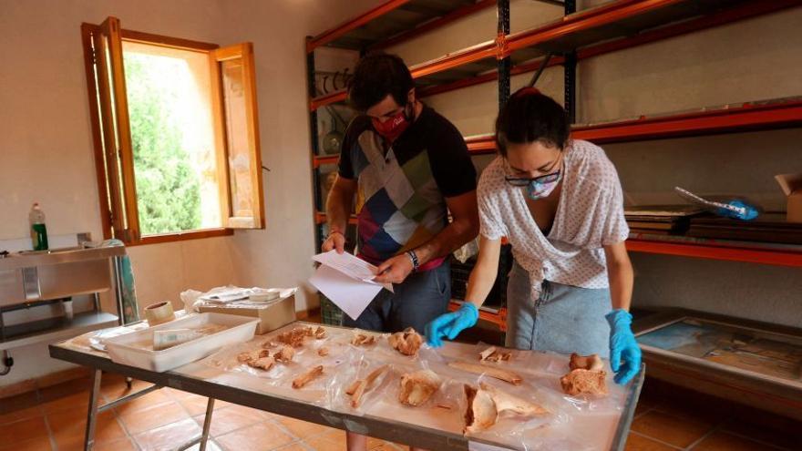 Borriol recupera a su rinoceronte de la era del Pleistoceno