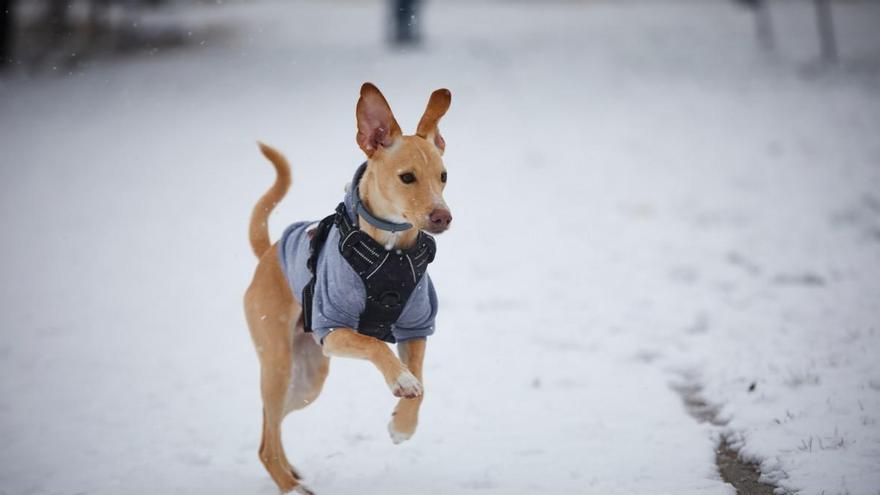 Sube una foto de la nevada en tu lugar de residencia y la publicaremos en nuestra web
