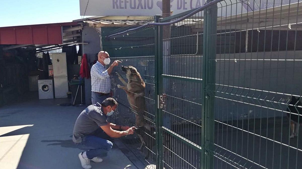 Los concejales juegan con algunos de los perros del refugio de animales.   | // FDV