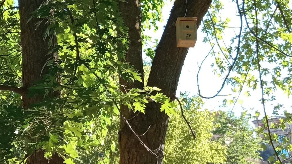 Una caja en un árbol de la Pradera. / E. P.