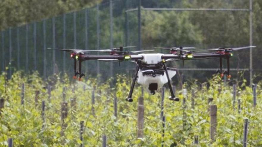 La viticultura gallega explora el uso de drones para aplicar fitosanitarios y reducir costes